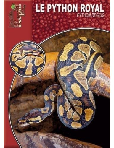 Le Python Royal (Python regius)