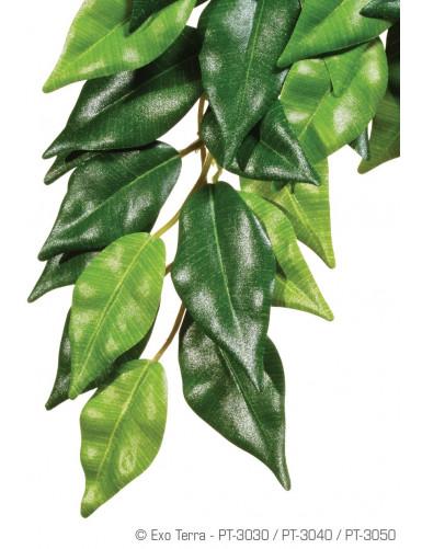 Ficus (Soie)  Exo Terra