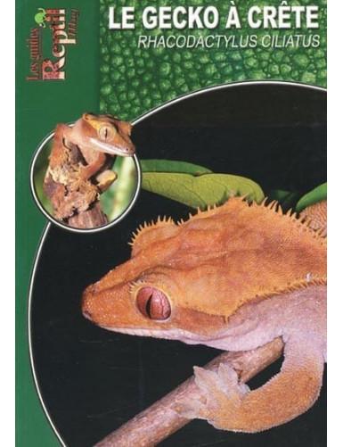 Le gecko à crête (rhacodactylus ciliatus)