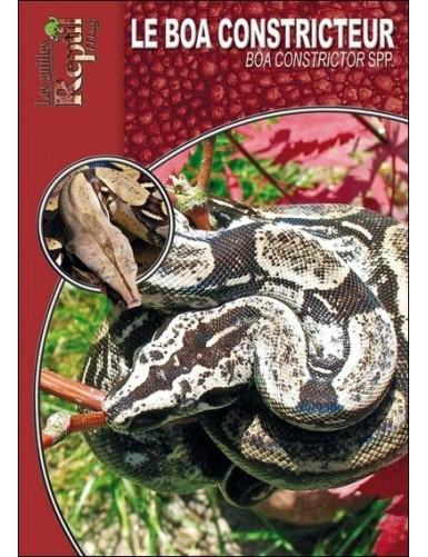 Le boa constricteur (boa constrictor ssp)