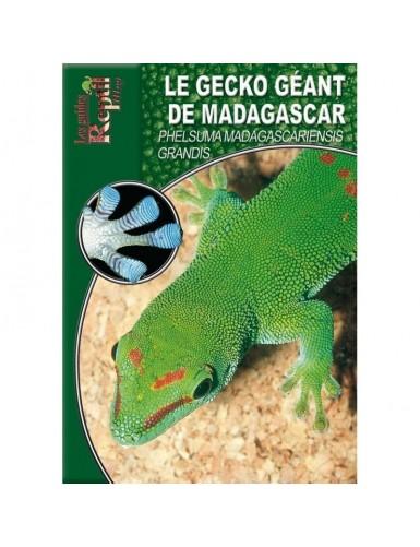 Le gecko géant de Madagascar (phelsuma madagascariensis grandis)