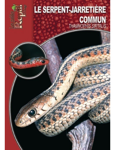 Le serpent jarretière commun (thamnophis sirtalis)