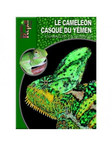 Le caméléon casqué du Yémen (chamaeleo calyptratus)
