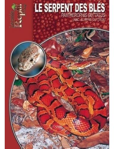 Le serpent des blés (Pantherophis guttatus)