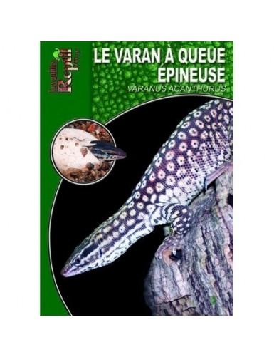 Le varan à queue épineuse (Varanus acanthurus)