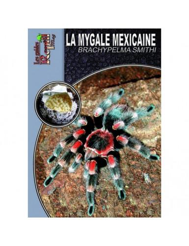 La mygale mexicaine (brachypelma smithi)