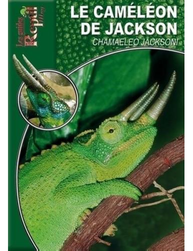 Le caméléon de Jackson (Chameleo jacksoni)