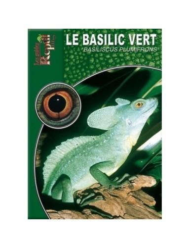Le basilic vert (Basiliscus plumifrons)