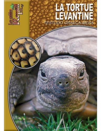 La Tortue Levantine (Testudo graeca ibera)