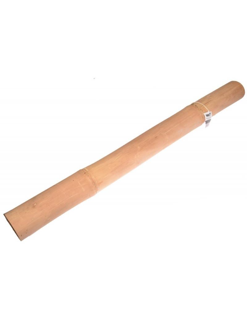 Gros Bambou Giganterra