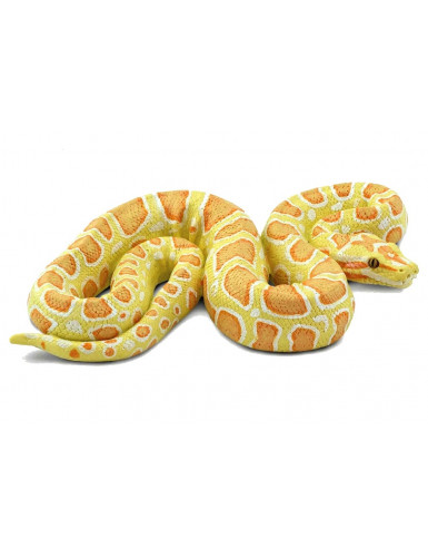 Python bivittatus albinos