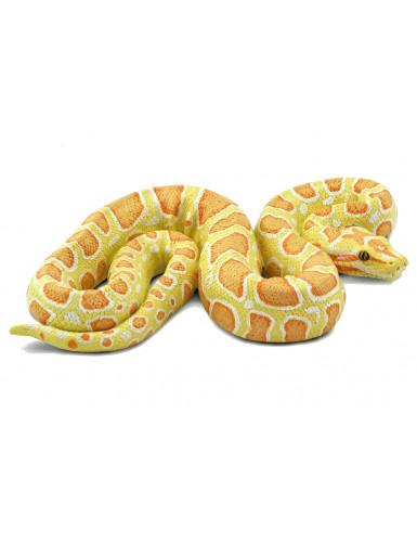 copy of Python regius