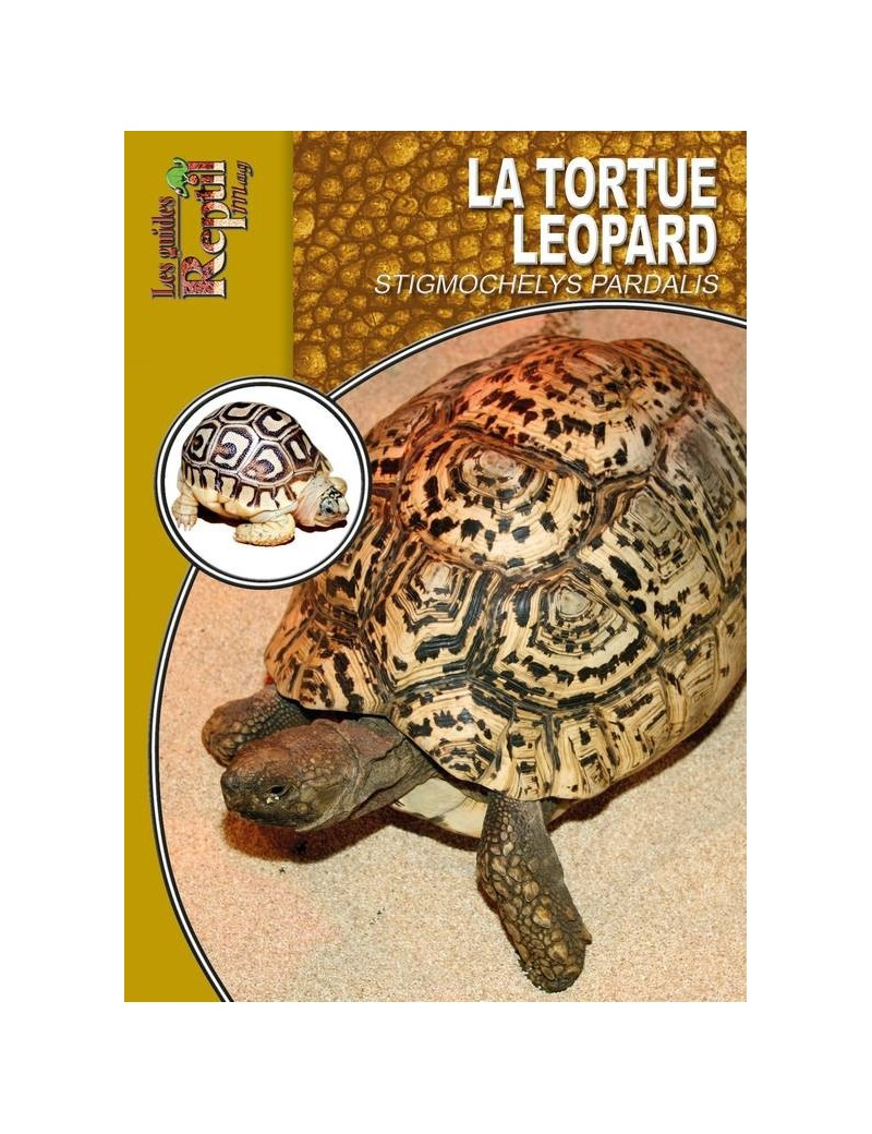 La tortue léopard (stigmochelys pardalis)
