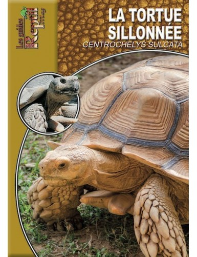 copy of La tortue des steppes (testudo horsfieldii)