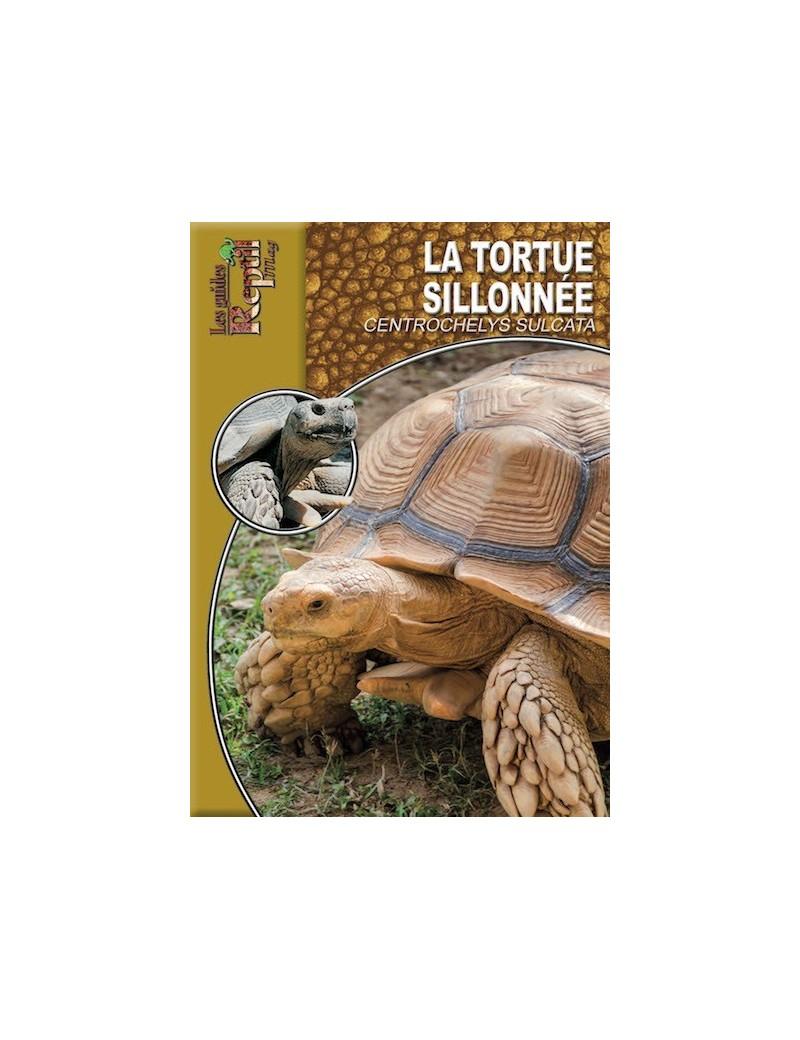 La tortue sillonnée centrochelys sulcata