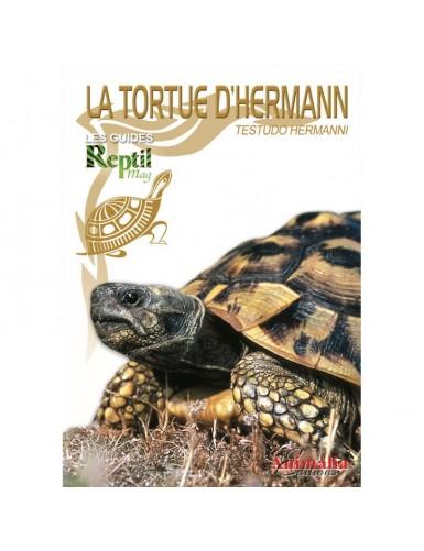 La tortue d'hermann (testudo hermanni boettgeri)