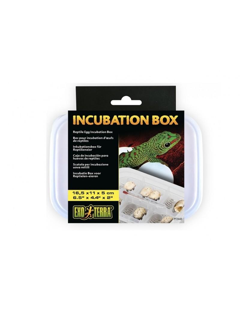Incubation Box Exo Terra