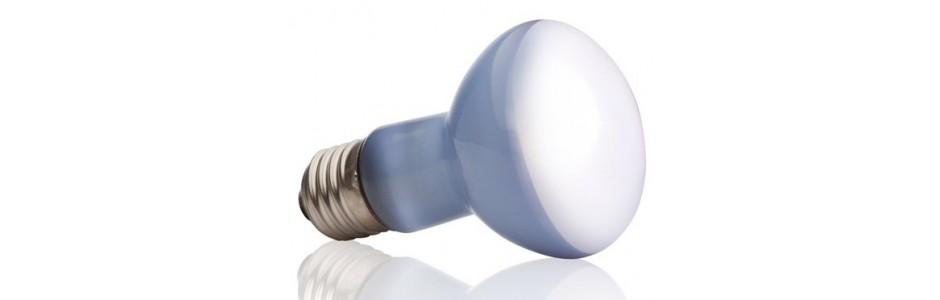 Ampoules lumineuses et Daylight