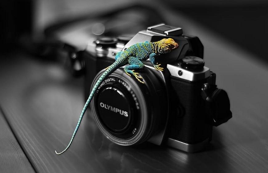 Photos et choix des animaux